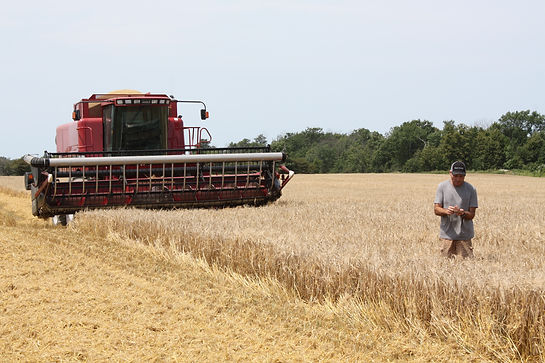 combining the barley which is used fo the malt