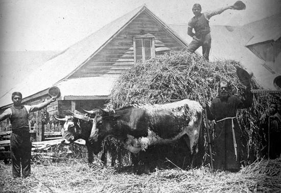 Hermano Bernardo en una cosecha de cereales