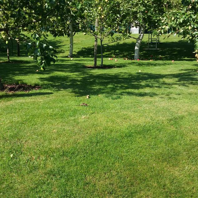 Žalia veja