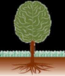 Brain Tree
