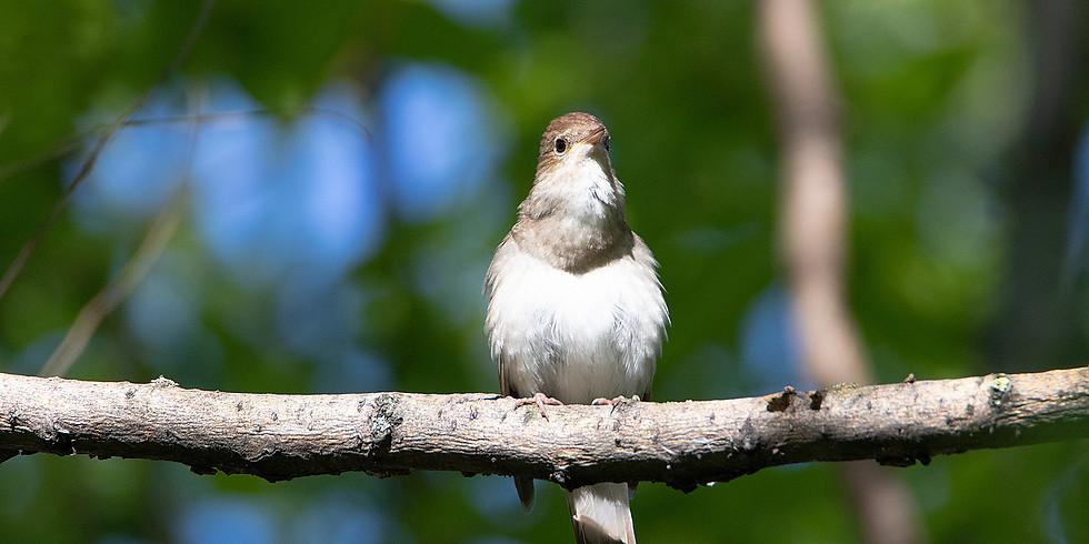Птицы Терлецкого парка