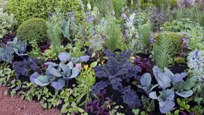 So, what is Companion Planting?