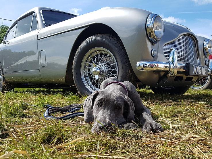 Aston with dog hi res.jpg