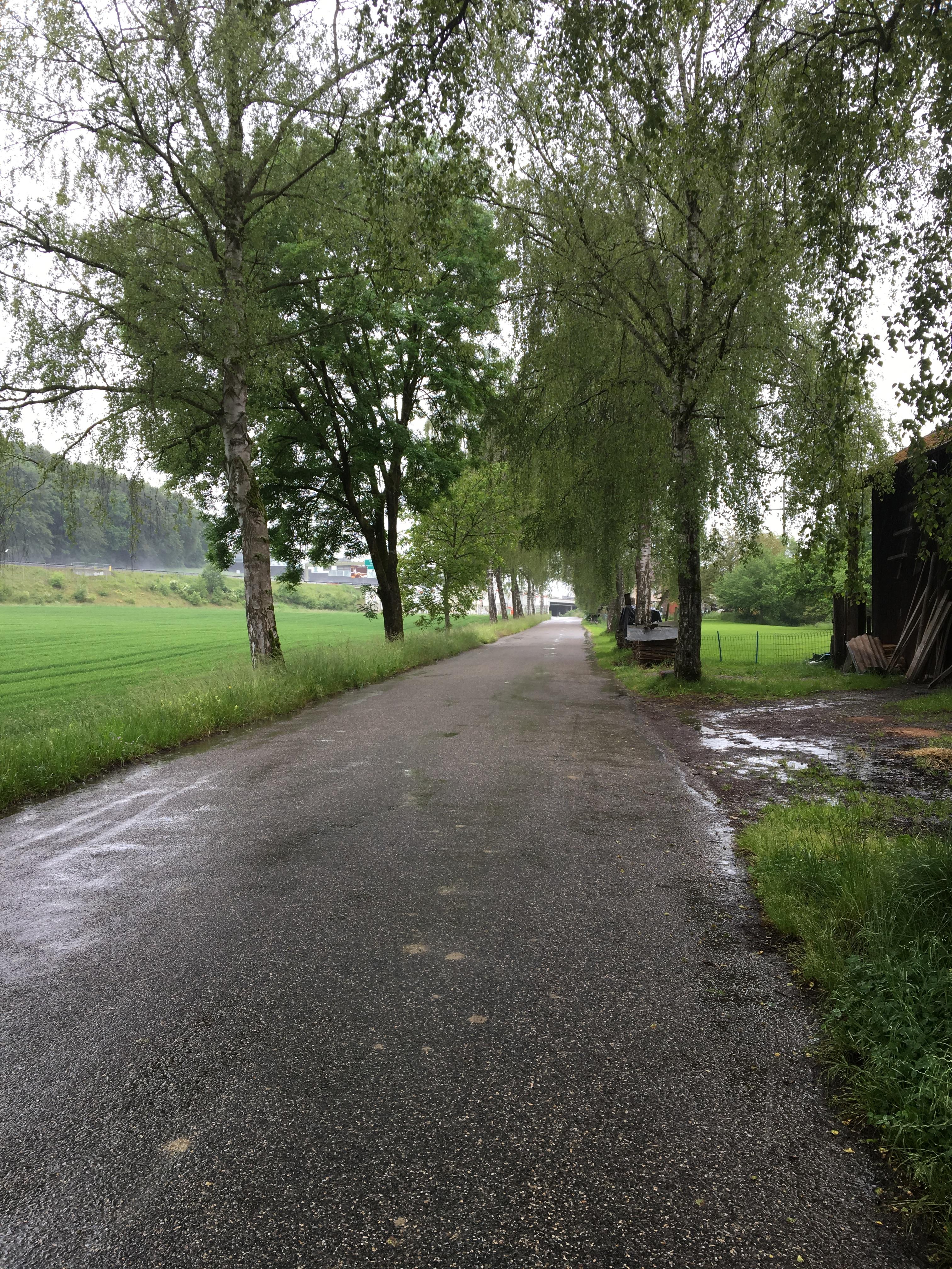 Radwegstudie Wiesendangen3961