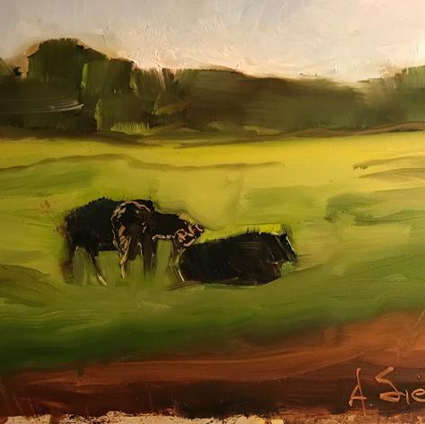 Angus Pasture 8 x 10