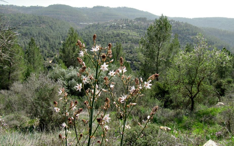 Sataf National Park