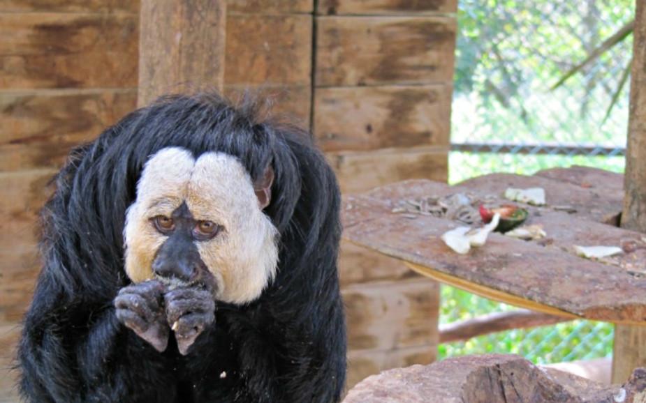 Squirrel Monkey at Ben Shemen Monkey Park