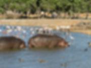 Ramat Gan Safari Park