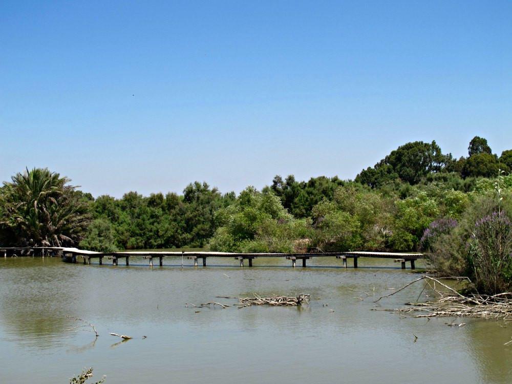 En Afek Nature Reserve