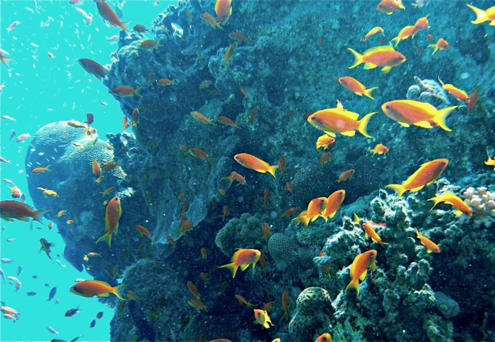 Coral Reef of the Red Sea in Eilat