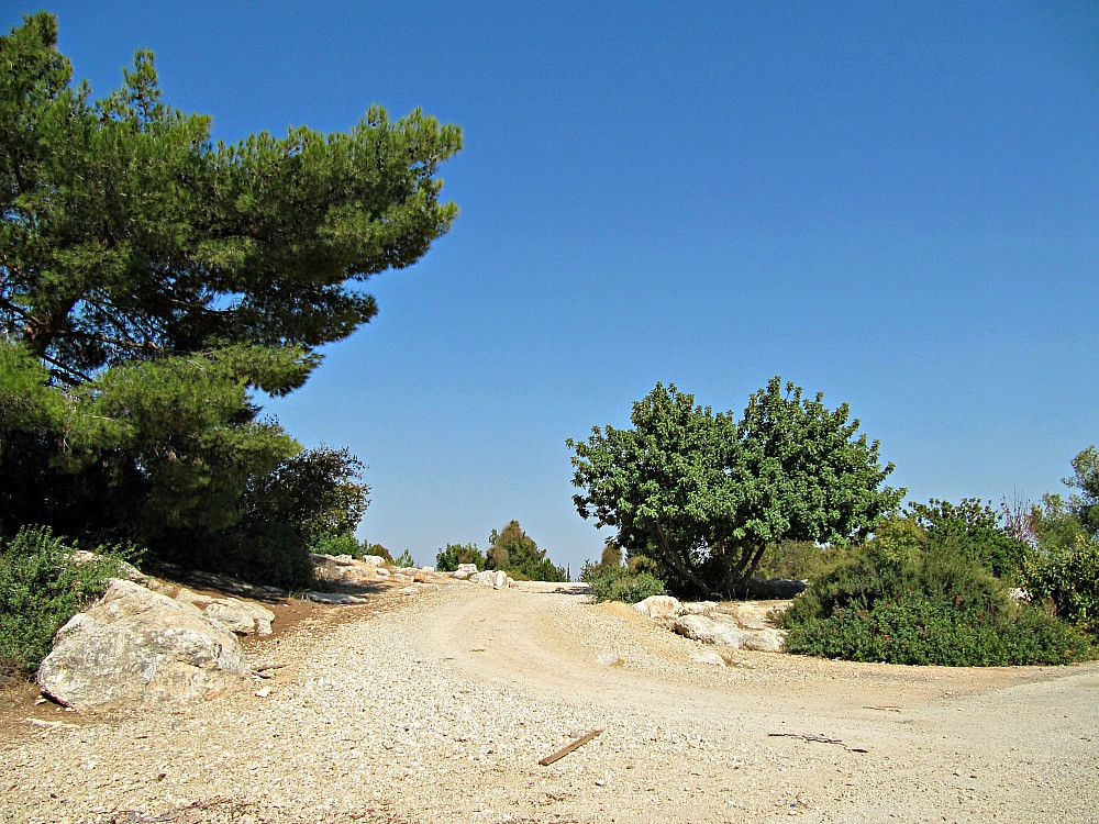 Ben Shemen Forest