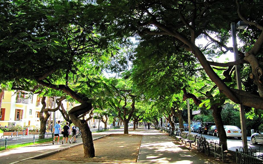 Rothshild Boulevard in Tel Aviv