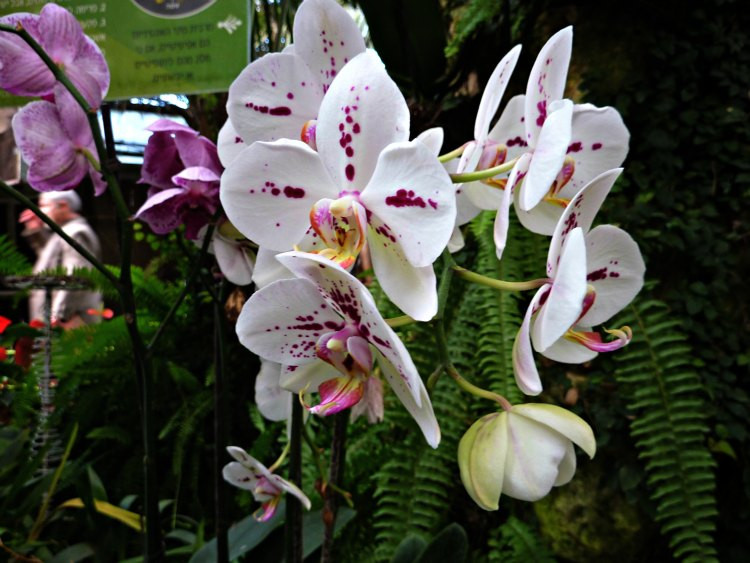 Utopia Orchid Park