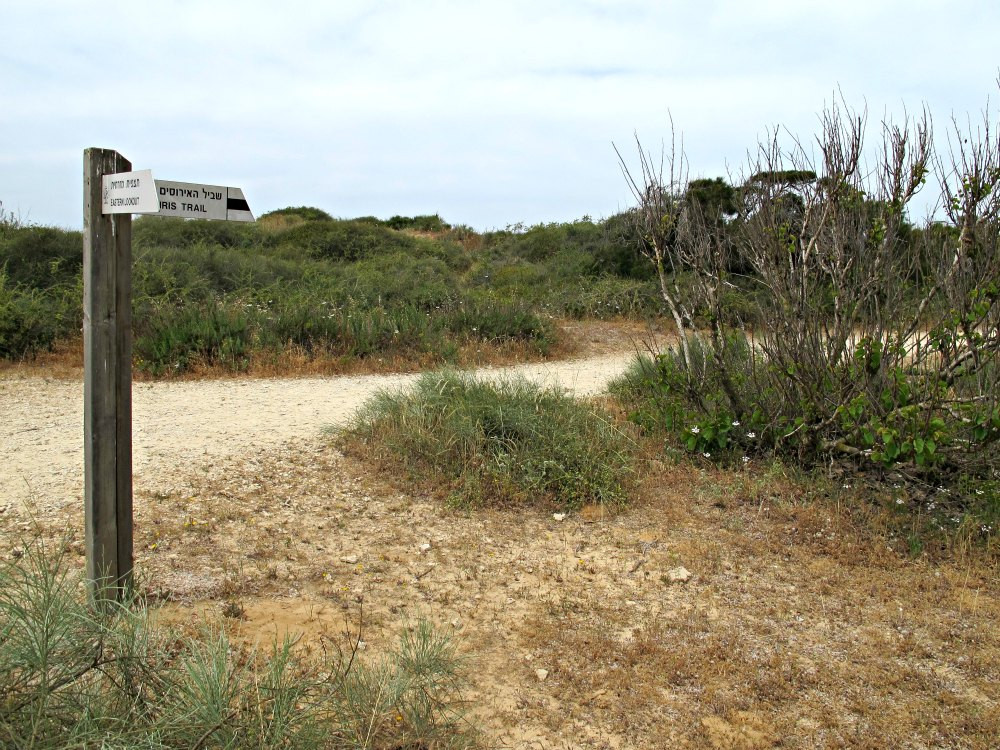 Iris Trail of Sharon Beach National Park