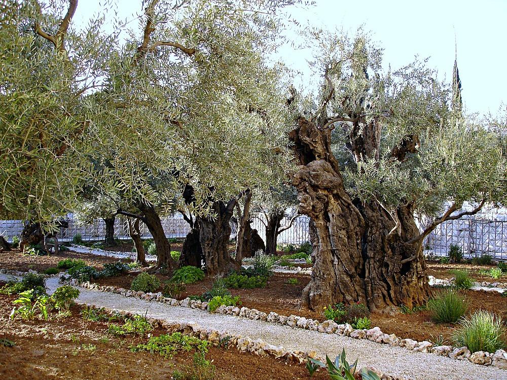 Garden Gethsemane
