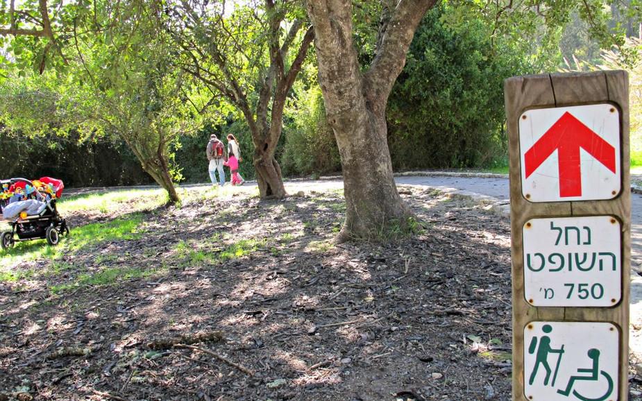 Path at Nahal HaShofet
