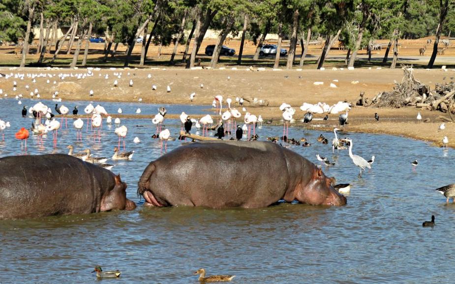 Water Hole at Ramat Gan Safari Park