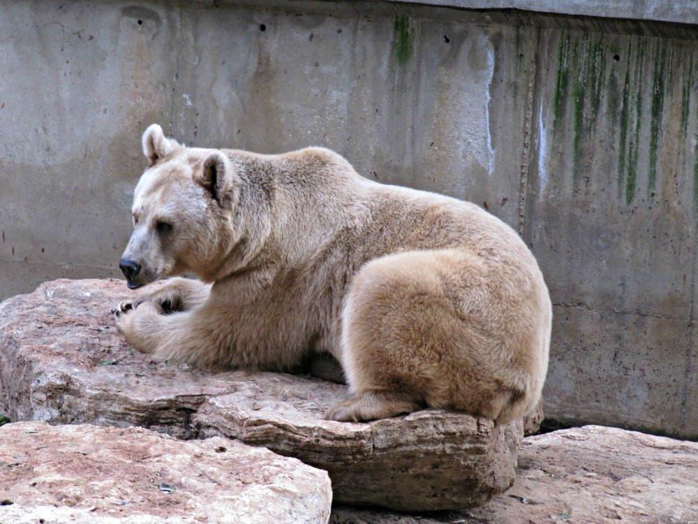 Bear at Ramat Gan Safari Park