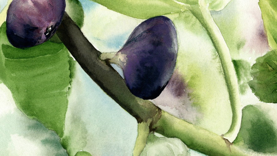 Fig Fruit8x10.jpg
