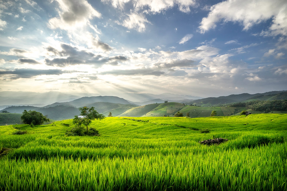 terraces-rice-fields-on-mountain-in-thailand.jpg