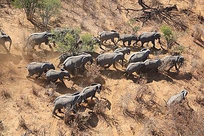 3. elephants from above_1.jpg