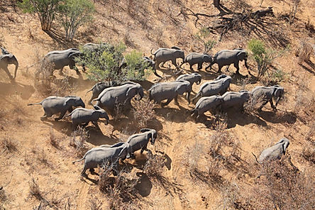 3. elephants from above_1.jpg