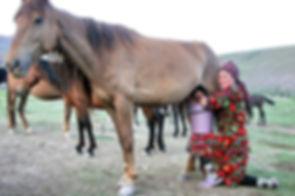 חלב סוסים משקה לאומי בקירגיזסטן