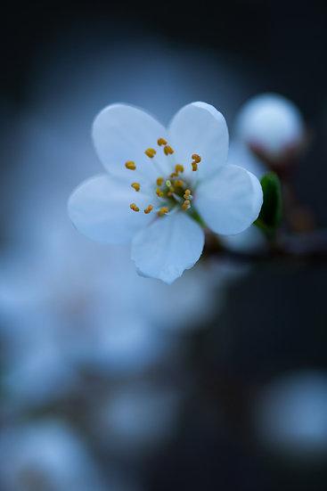 A ce printemps perdu