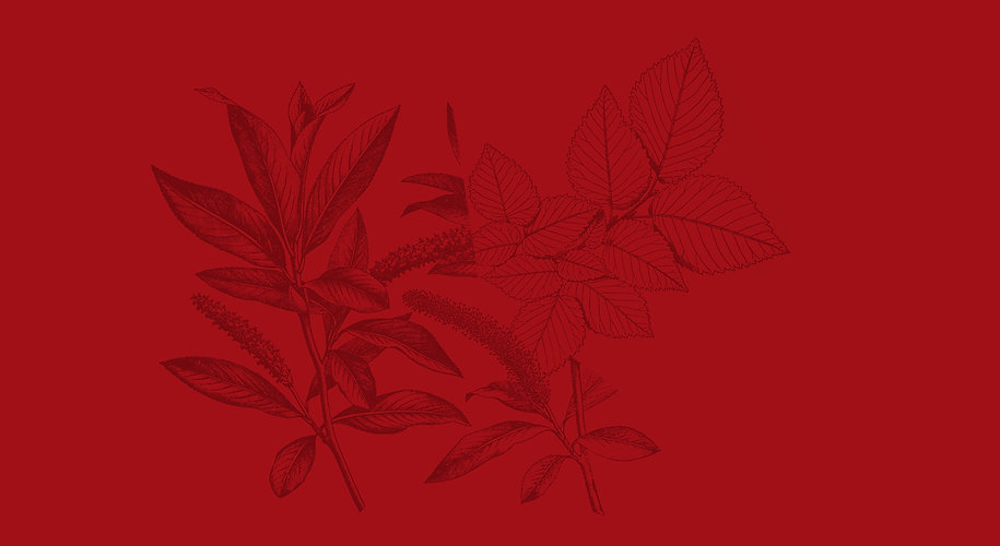 Red Header.jpg