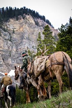 horse-mule-country38.jpg