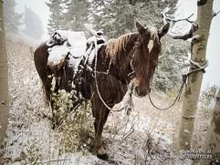 horse-mule-country12.jpg