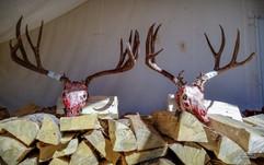 mule-deer-hunt2018-29.jpg
