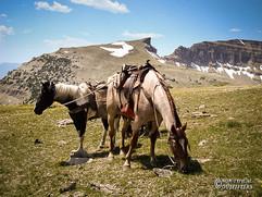 horse-mule-country11.jpg