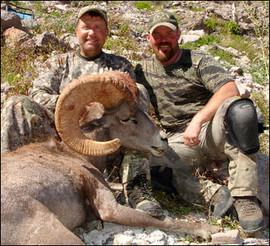 sheep-hunt2008-08.jpg