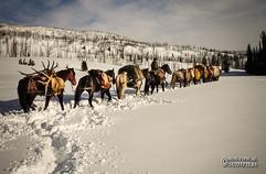 horse-mule-country03.jpg