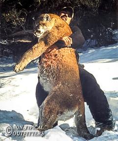 non-typical-mountain-lion11.jpg