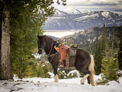 horse-mule-country33.jpg