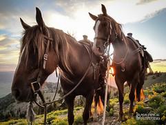 horse-mule-country17.jpg