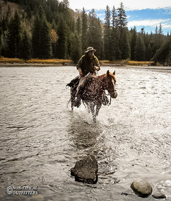 horse-mule-country02.jpg
