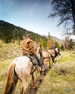 horse-mule-country39.jpg