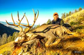 mule-deer-hunt2016-09.jpg