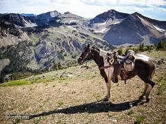 horse-mule-country18.jpg