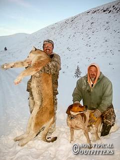 non-typical-mountain-lion10.jpg