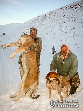 non-typical-mountain-lion10.jpg