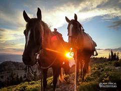 horse-mule-country16.jpg