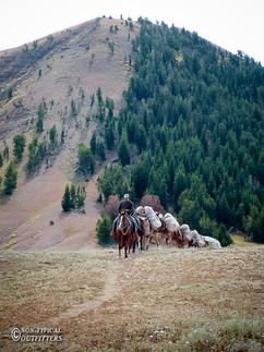 horse-mule-country40.jpg
