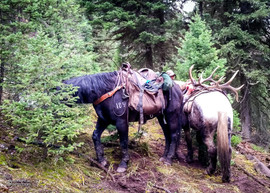 elk-hunt2016-05.jpg