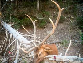 elk-hunt2013-07.jpg