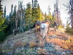 horse-mule-country23.jpg