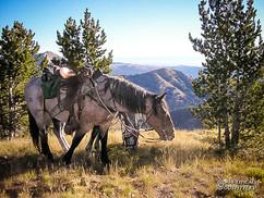 horse-mule-country09.jpg